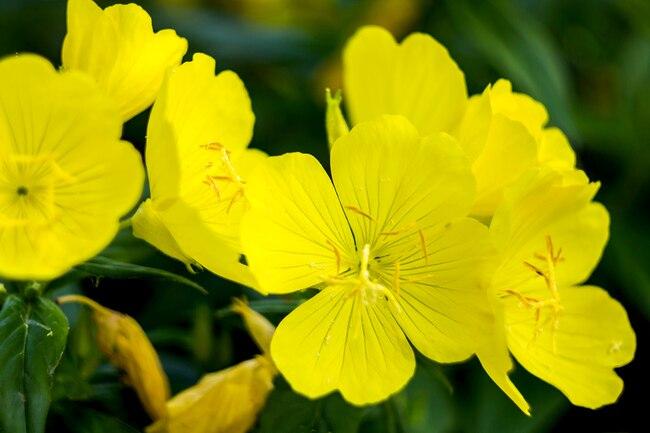 Природан лек за бол у дојци